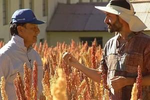 Quinoa, el grano de oro