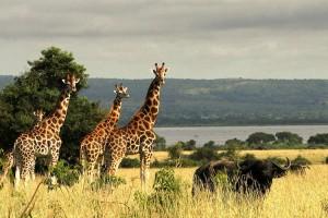 FOTOS: Los increíbles paisajes de Uganda