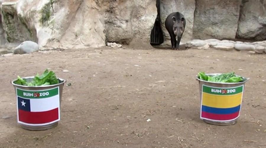 ¡Vamos Manolo! El tapir entregó su predicción para choque Chile vs Colombia