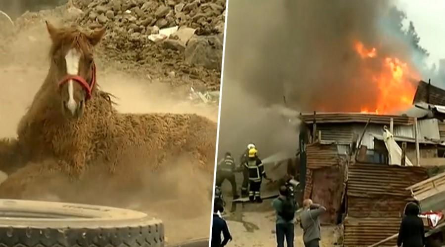 Incendio en comuna de Cerro Navia deja al menos 10 caballos muertos