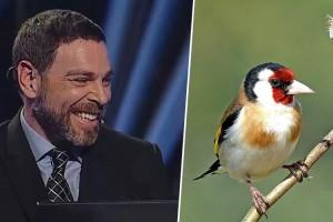 ¿Con qué nombre común es conocido el ave Carduelis Carduelis?