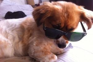 Época de vacaciones: ¿Qué debo hacer con mis mascotas?