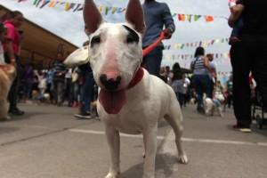 Un amor incondicional: La causa que incentivó el cuidado y adopción animal