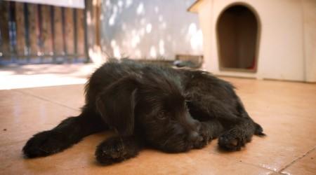 Pic a Pet #Capítulo 6: Los cuidados que requiere un cachorro