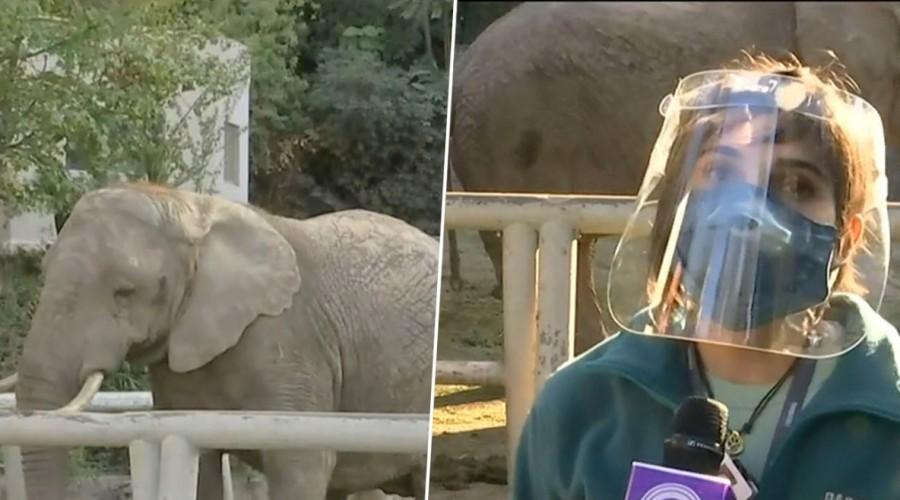 Animales de zoológico muestran más interés en humanos tras ausencia de visitantes