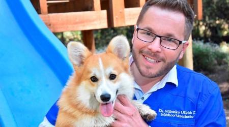 #5TipsLive para cuidar a las mascotas en cuarentena