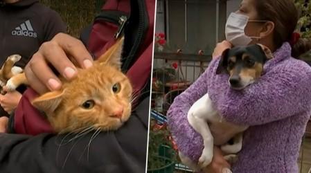 """Campaña """"Las Mascotas también comen"""" ya tiene sus primeras donaciones para perros y gatos abandonados"""