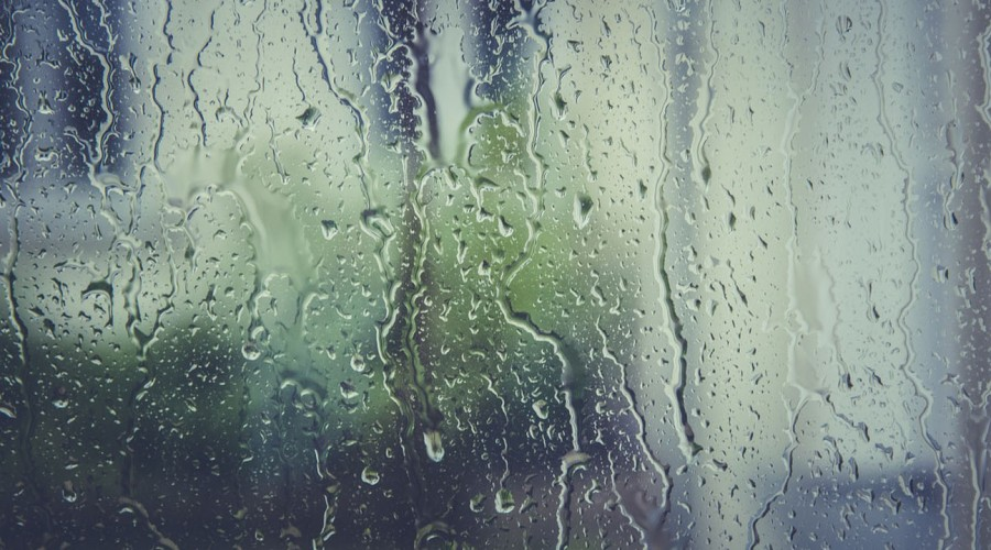 Michelle Adam explica extraño fenómeno que botó árboles en el sur de Chile y anuncia precipitaciones