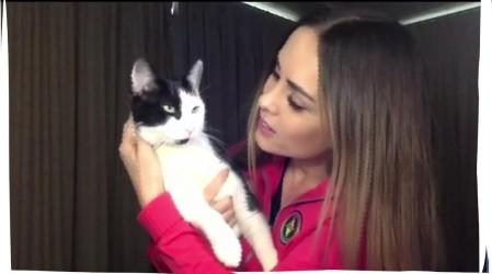 """Maura Rivera nos presenta a su gato Benito en """"Conexión Única con mis Mascotas"""""""