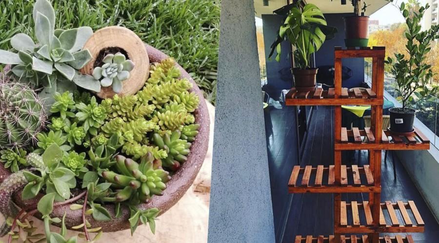Desde cactus a muebles hechos con amor en el especial decoración de Emprendedores Mega