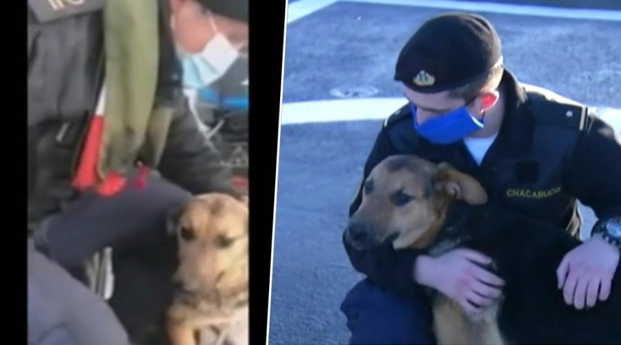 """""""Canopus"""": el perrito rescatado por la Armada que se unió a la tripulación del buque Chacabuco"""