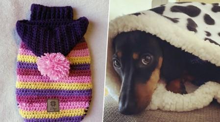 Desde chalecos onderos hasta mantas para abrigarlos en este Especial Mascotas de Emprendedores Mega