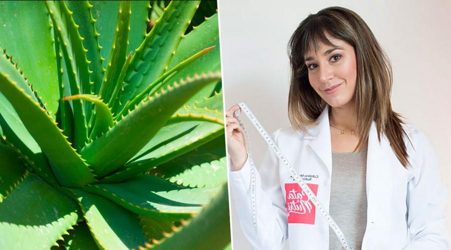 """#5TipsLive: Cata """"la nutri"""" explica cómo aprovechar los beneficios del Aloe vera"""