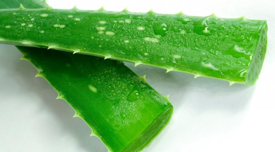 #5TipsLive: ¿En qué fijarse para elegir la versión más eficiente de Aloe vera?