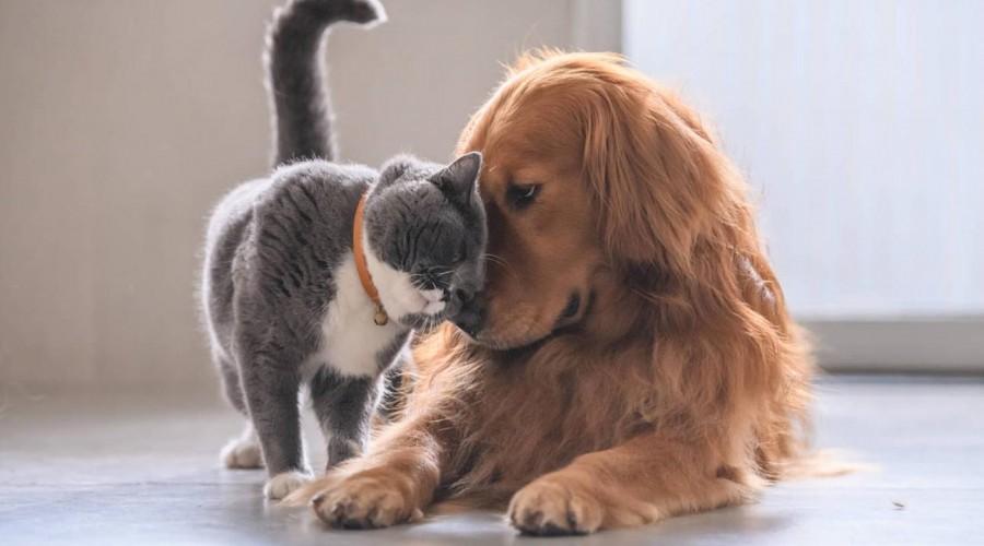 Enrojecimiento y granos son claves para determinar que hay pulgas y garrapatas en mascotas