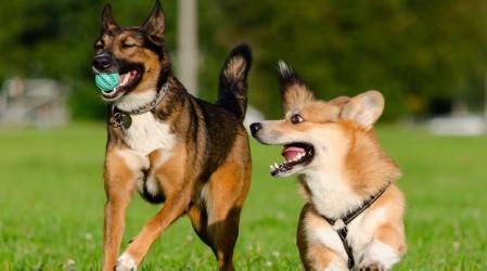 En vivo: Médico veterinaria explica cómo combatir pulgas y garrapatas en #5TipsLive