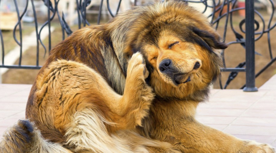 No solo a los perros: Desparasitarlos también previene enfermedades en humanos