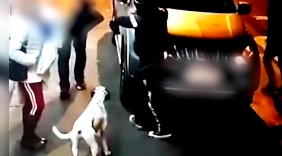 Delincuentes dedicados a los portonazos adiestraron a un perro para asaltar a familia en Lo Prado