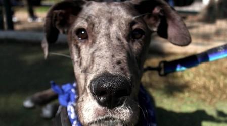 Alzheimer en perros: Aprende a reconocer las posibles señales de la enfermedad