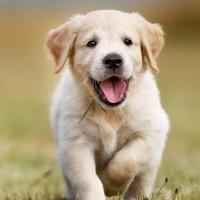 ¿Cómo combatir pulgas y garrapatas en las mascotas? Experta explicará en vivo