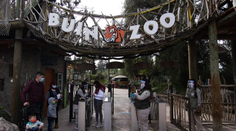 Buin Zoo reabrió sus puertas: Conoce los aforos y protocolos sanitarios para asistir