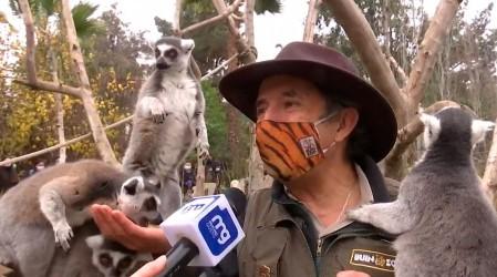 """""""Es parte de la historia del país"""": Director del Buin Zoo invita a visitar el parque durante las vacaciones"""