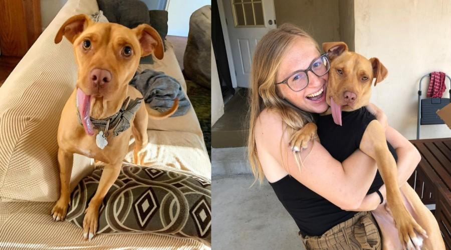 ¡Lo aman tal como es! Conoce la historia de Bud, un perrito que perdió su mandíbula y encontró una familia