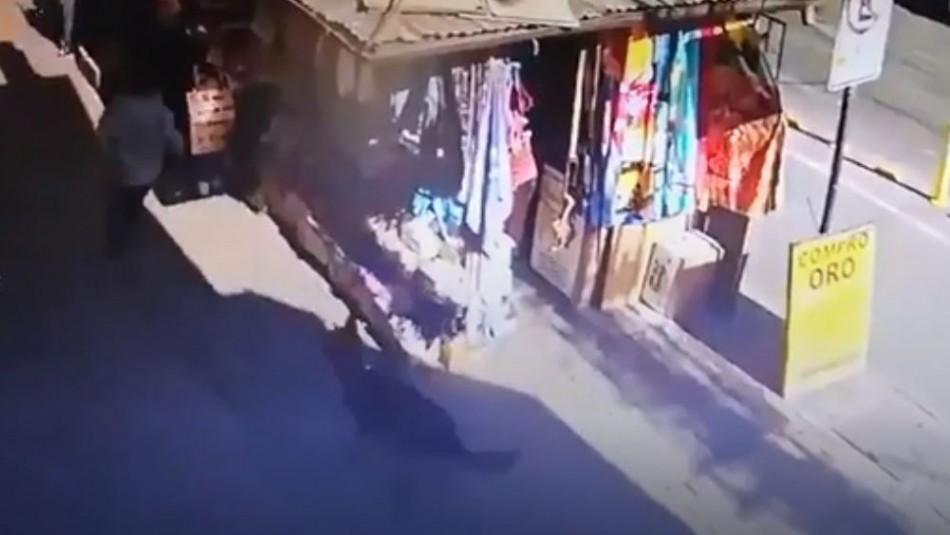 [VIDEO] Perro policial atrapa a delincuente que escapaba de Carabineros