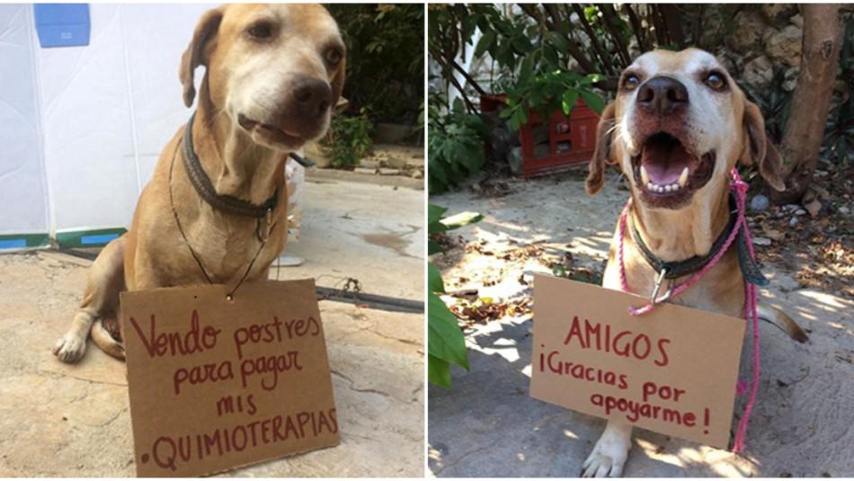 Perro tuvo que vender postres para pagar quimioterapia en México / Redes sociales.