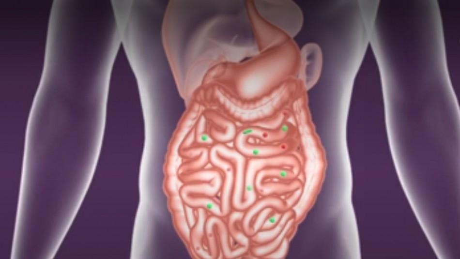 Una microbiota intestinal sana aumenta el sistema de defensa