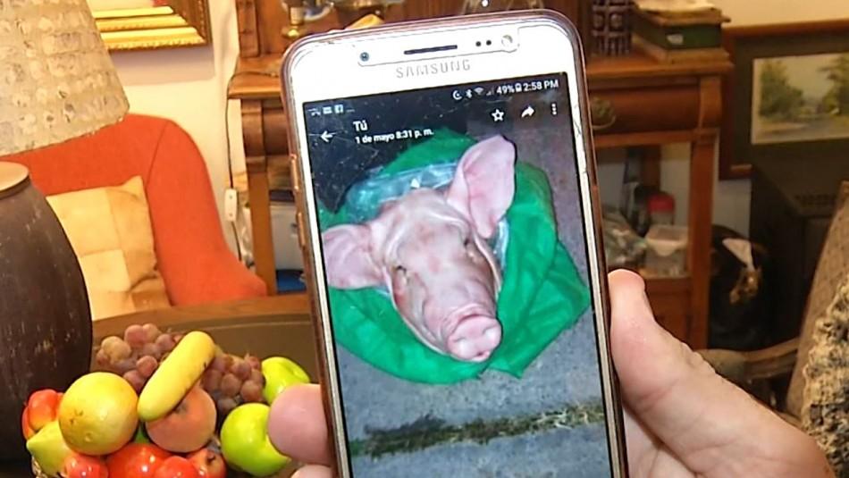 [VIDEO] Dueña de local en Vitacura denuncia que fue amenazada con una cabeza de chancho cortada