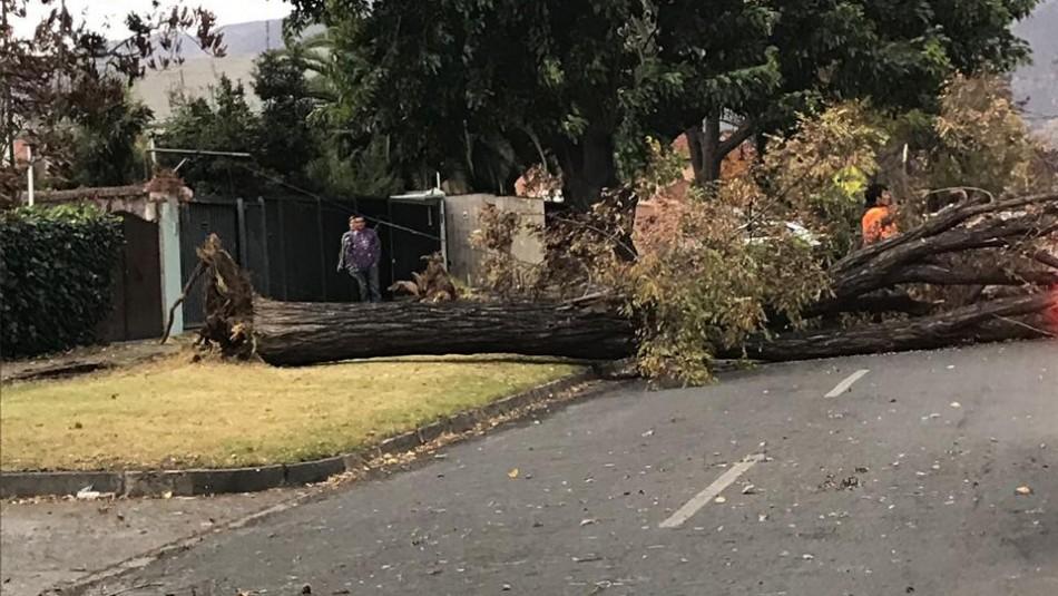 Fuerte viento provoca cortes de luz y caídas de árboles en distintos puntos de Santiago