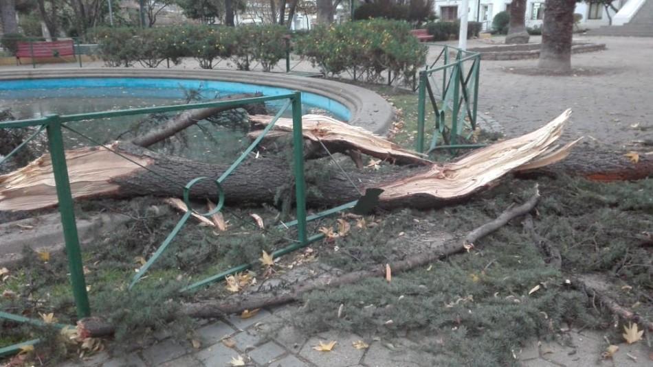 Ráfagas de viento: Caída de árbol en Ñuñoa dejó a una persona lesionada