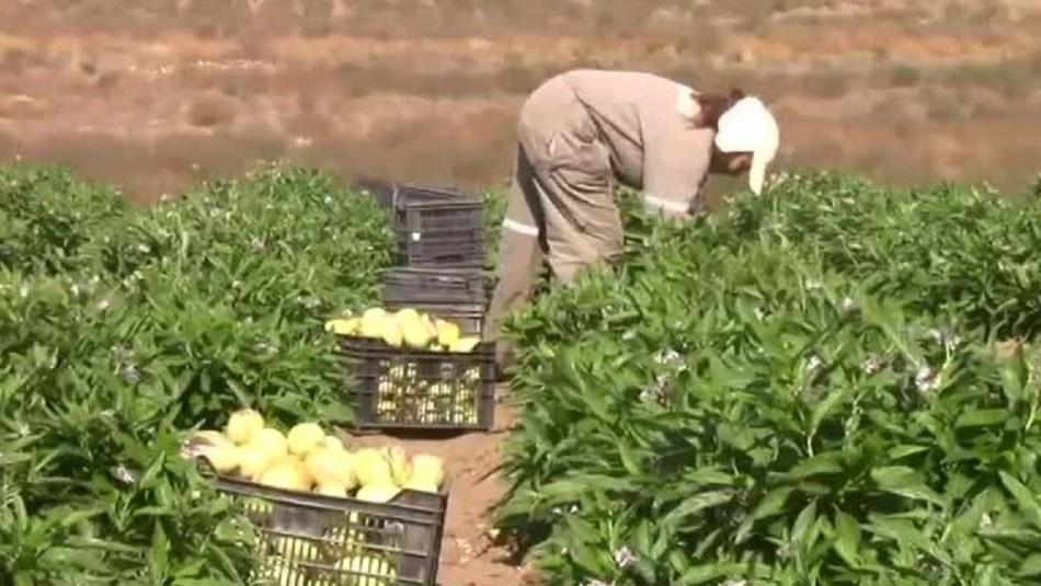 Encuentran trazas de plaguicidas en escolares y agricultores de Coquimbo y El Maule