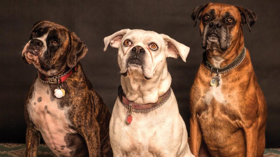 ¿Te comunicas con tu perro? Esta es la explicación de sus expresiones faciales