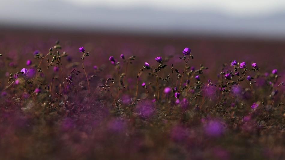 Oasis en pleno Desierto de Atacama busca contrarrestar el calentamiento global