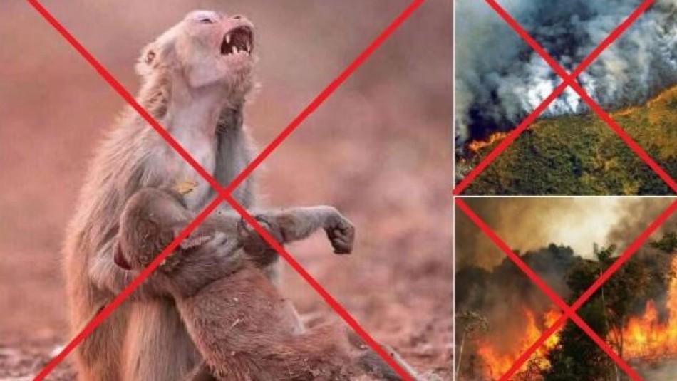 Las falsas fotos que circulan en redes sociales sobre incendios en la Amazonia