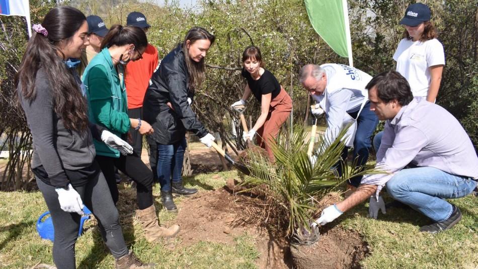 Alianza potencia plantación de especies nativas en Parque Metropolitano de Santiago
