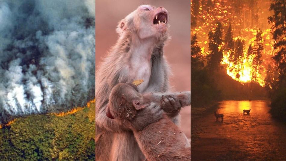 Las fotos engañosas sobre los incendios que arrasan la Amazonia