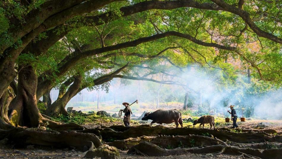 China multará con 284 mil dólares al que tale un árbol antiguo