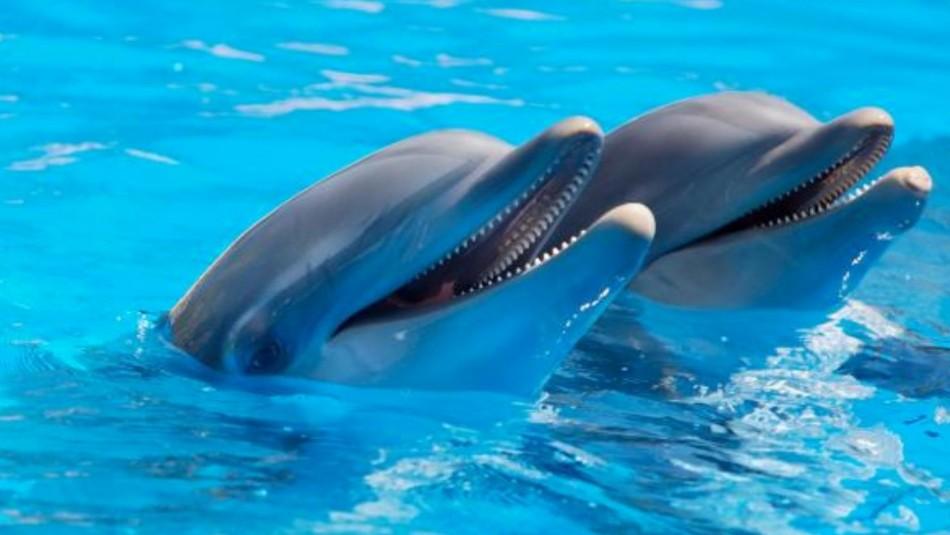 Ataque de delfines arruina vacaciones de niña de 10 años