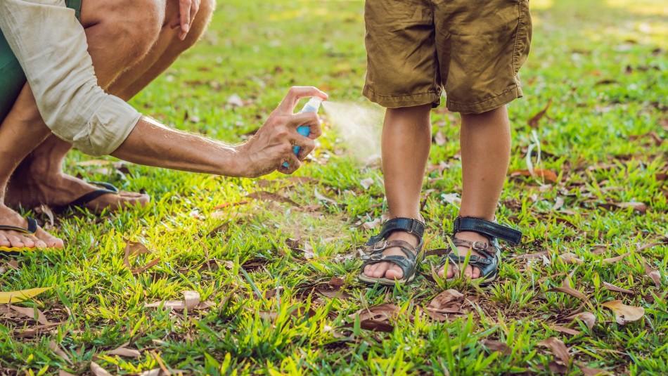 Para evitar picaduras y molestias: La forma adecuada de usar repelente de  insectos - Meganoticias