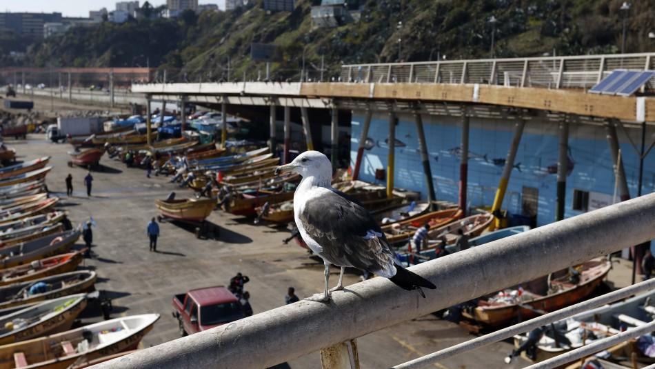 Valparaíso despejado pero con viento: Revisa el pronóstico del tiempo