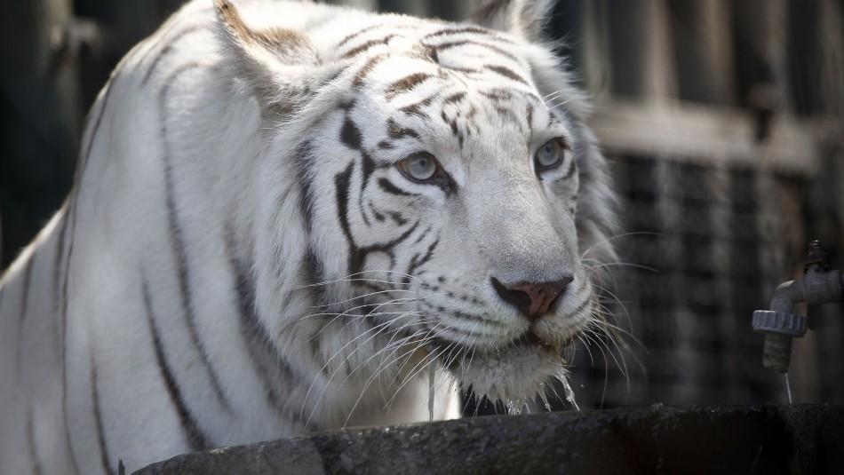 Zoológico Nacional: Conoce los horarios y los precios de las entradas
