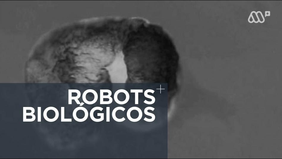 Científicos crean robots