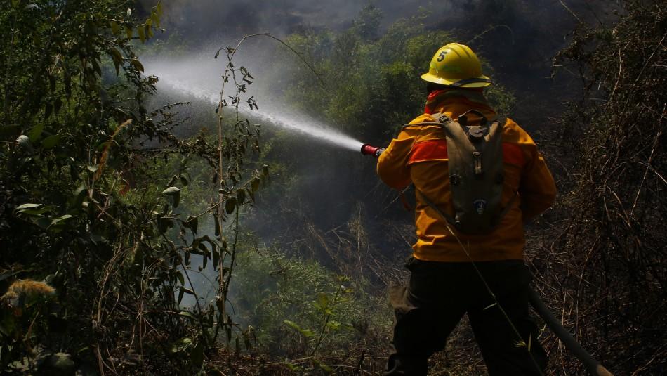 Incendios forestales activos han consumido más de 1.200 hectáreas en la región del Biobío