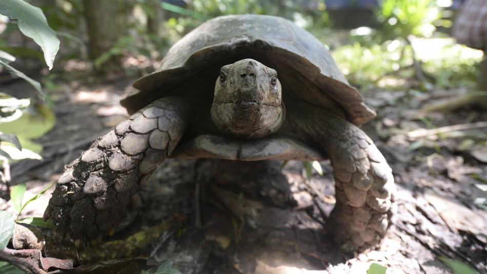 Italia: Multan a una mujer por pasear a su tortuga durante la cuarentena por coronavirus