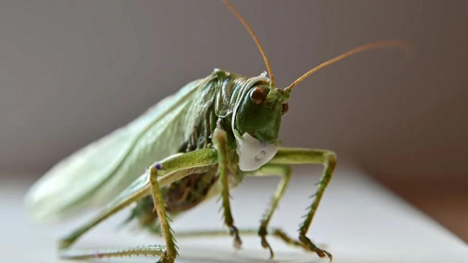 Mascarillas para insectos: Artista ruso busca crear conciencia en medio de la pandemia