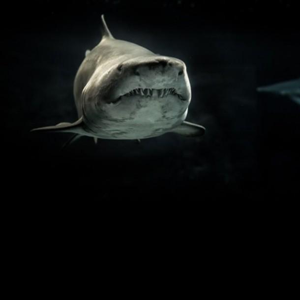 Un tiburón mata a un surfista en la costa este de Australia