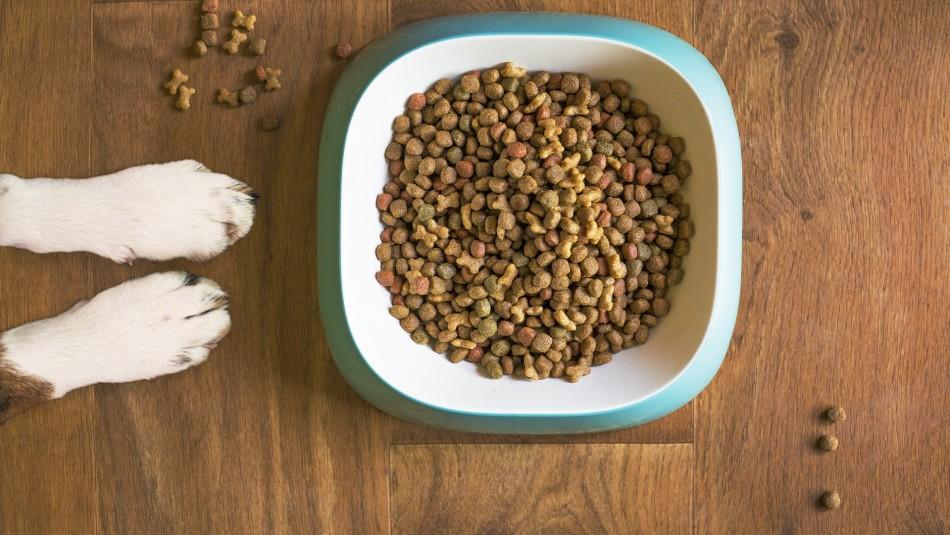 Sernac oficia e investiga a marca de alimento para mascotas que retiró productos del mercado